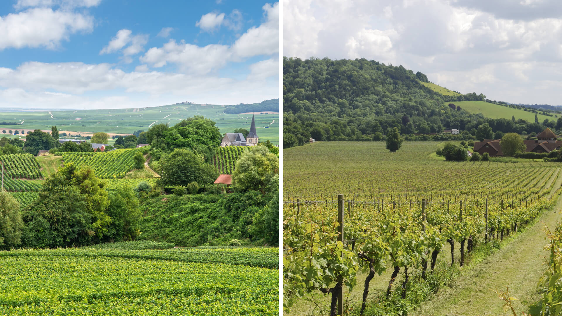 Champagne Wine Tour vs. South East England Wine Tour